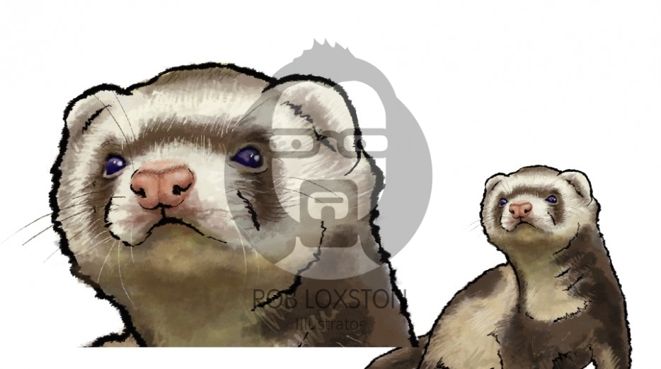 Ferret - by Rob Loxston
