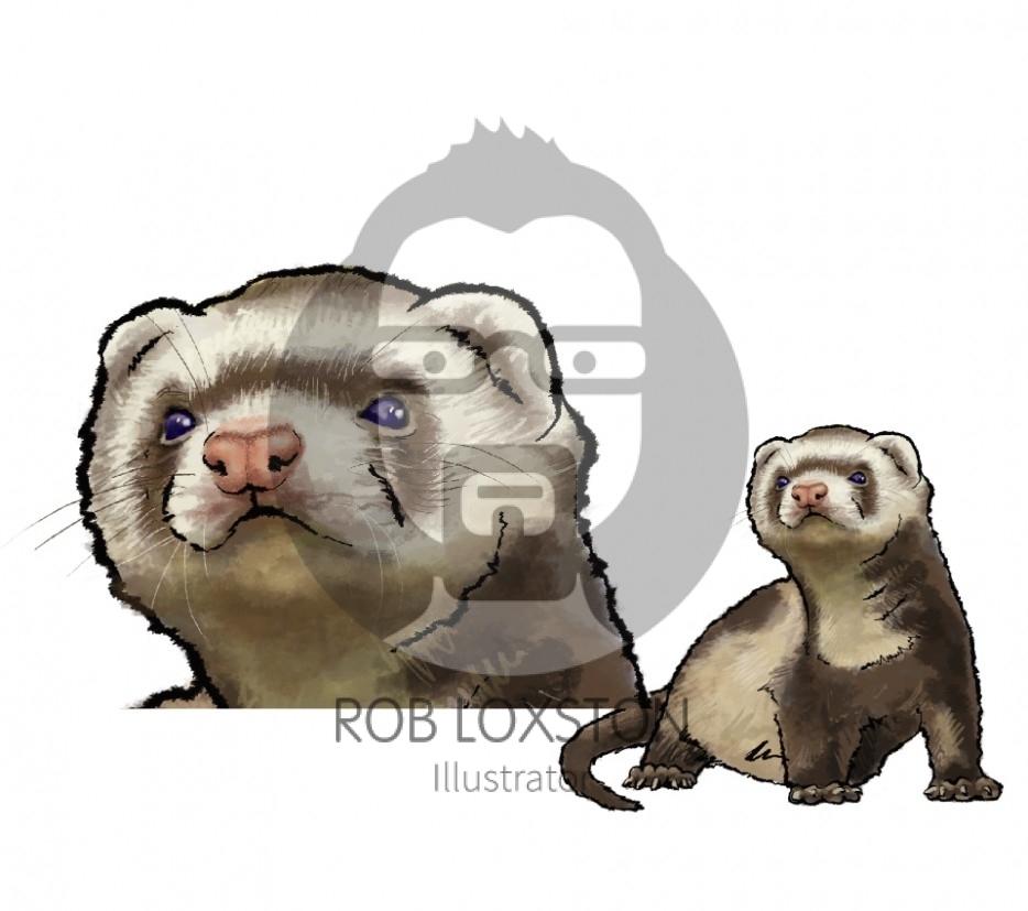 Ferret - by Rob Loxston
